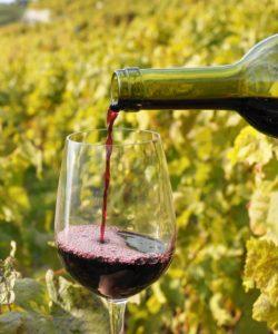 Rødvin ved vinmark